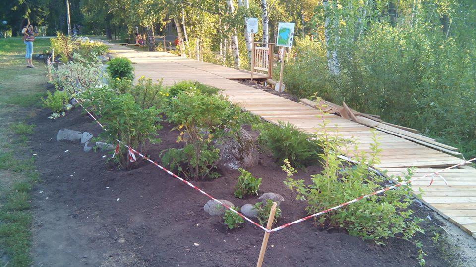Парк с озером благоустраивают общественники в парке Академгородка