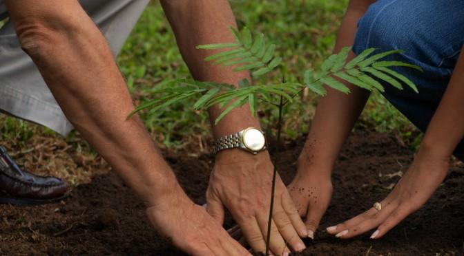 Посади свое дерево!