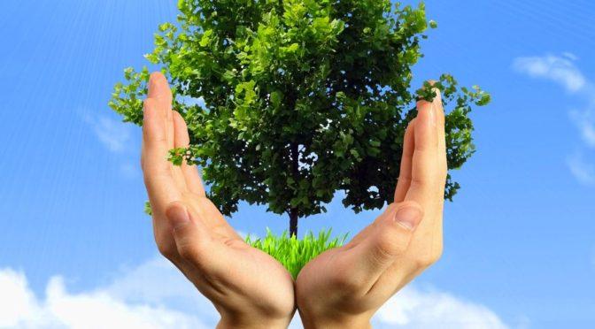 Посади своё дерево!